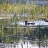 wetland lagoon