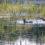 PUB Decision on Grand Marais Lagoon Rates